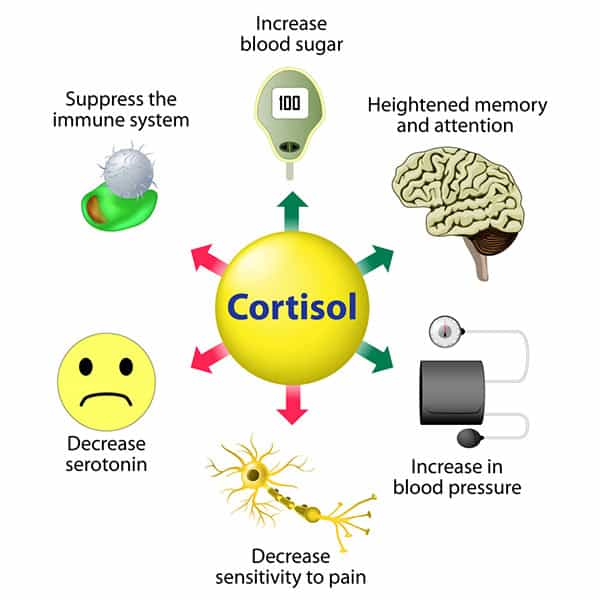 Stress Hormones (Cortisol)